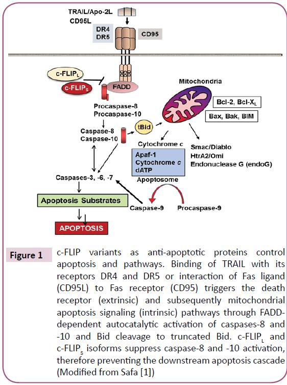 biomarkers-anti-apoptotic